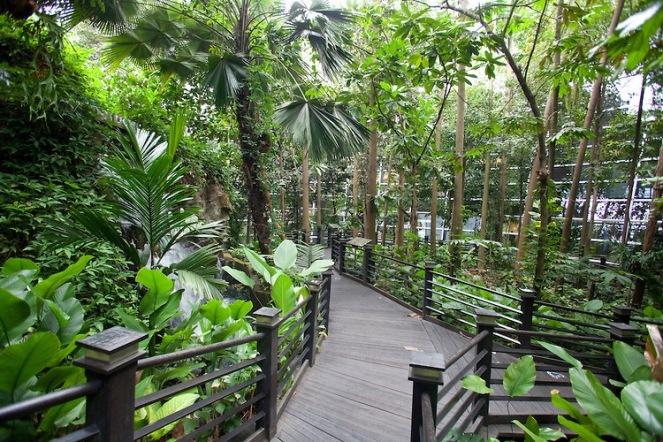 Rainforest walk, Sepang Airport, Kuala Lumpur, Malaysia